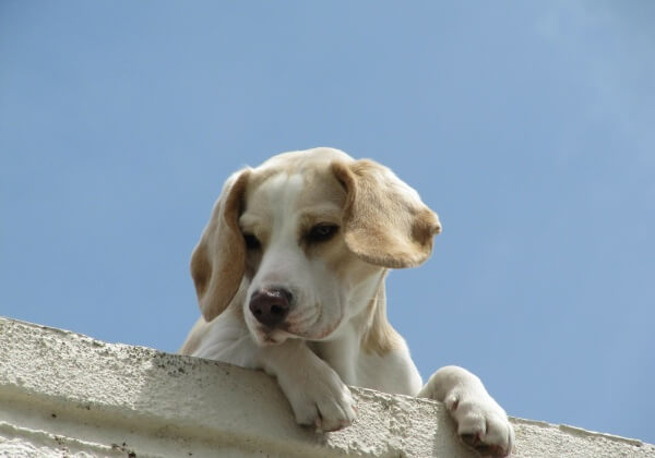 Video: Man Throws Dog off Roof for 'Fun'
