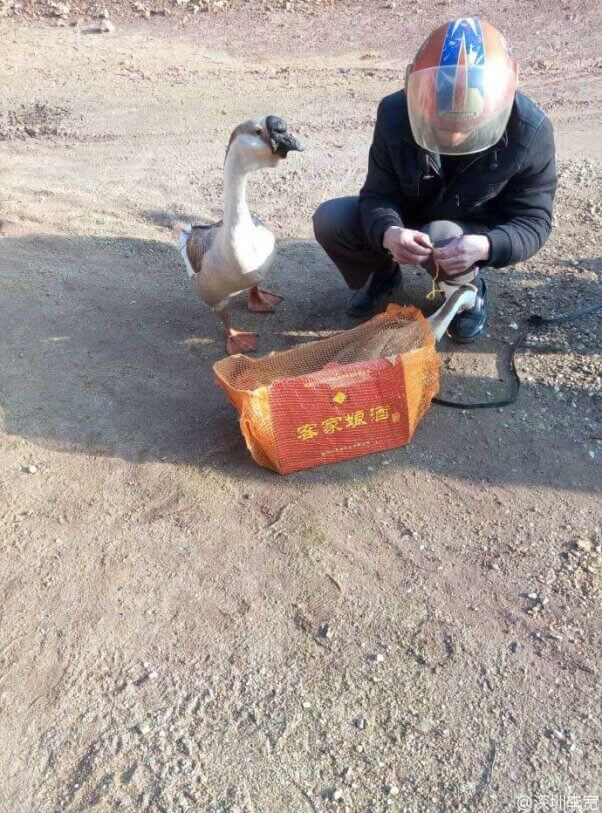 Sad-Geese-Tied-Up-602x813