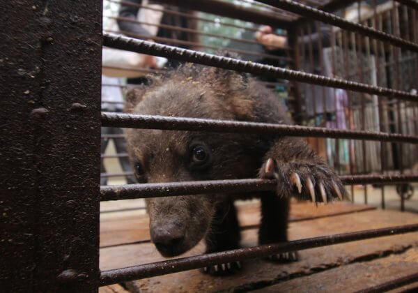 Sick bear cub China circus