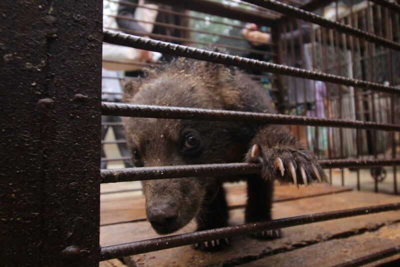 Sick bear cub China circus
