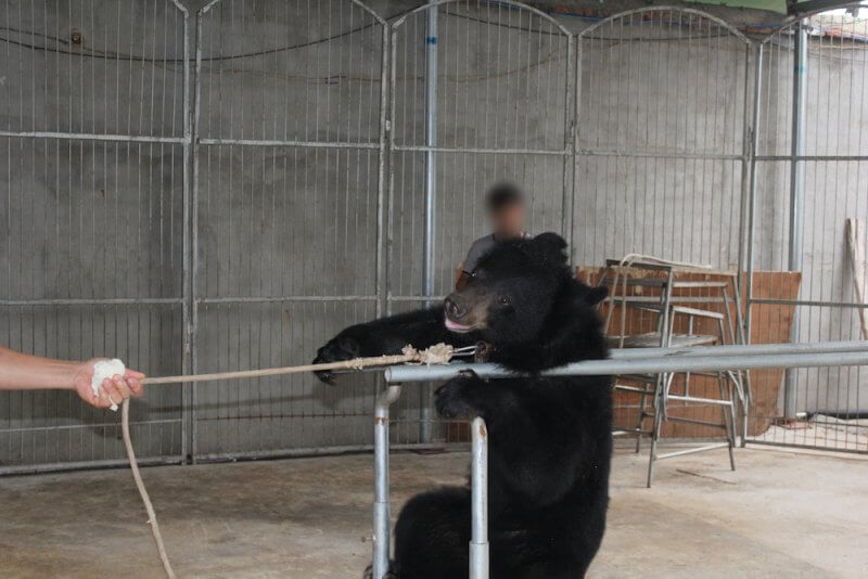 Bear pulled by rope China circus
