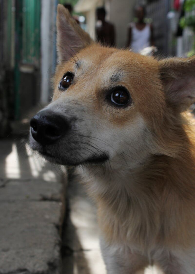 Don't Ignore Homeless Animals—They Need Your Help
