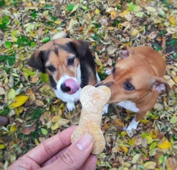 pumpkin-and-peanut-butter-halloween-dog-treats-1