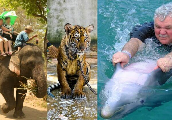 TripAdvisor Stops Selling Tickets to Animal 'Attractions'
