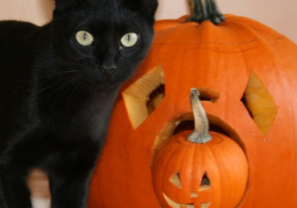 Keep Cats and Dogs Safe During Halloween