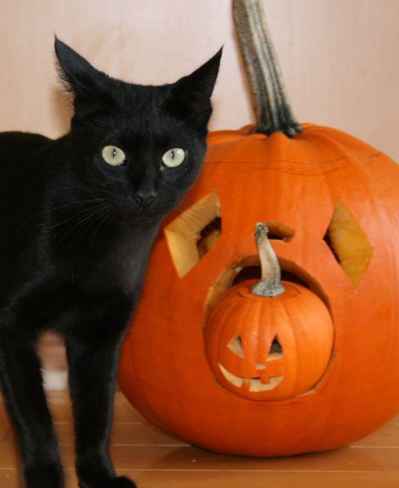 halloween_blackcat_peta2