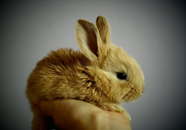 New Cosmetics Testing Regs in China Could Spare Thousands of Animals