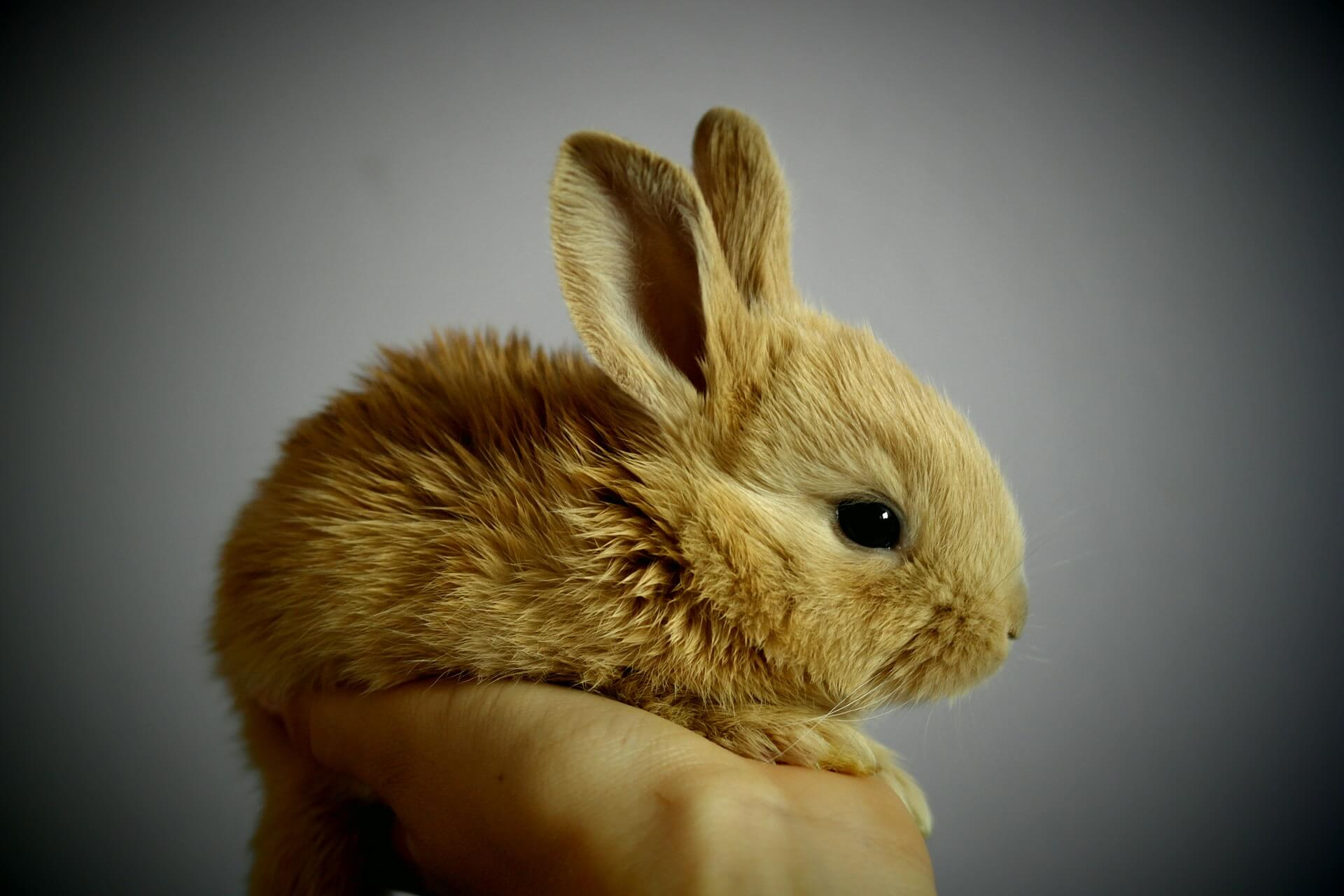 Amazing Progress! China to Approve First Non-Animal Cosmetics Test