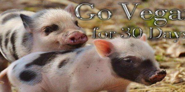 This November, Go Vegan for 30 days for #WorldVeganMonth