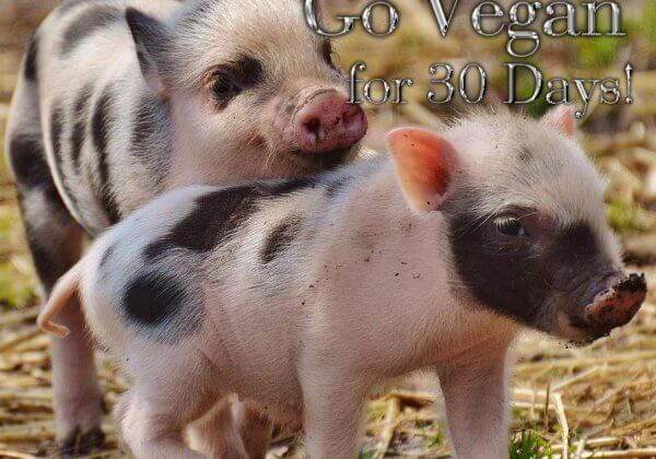 This November, Go Vegan for 30 days for #WorldVeganMonth