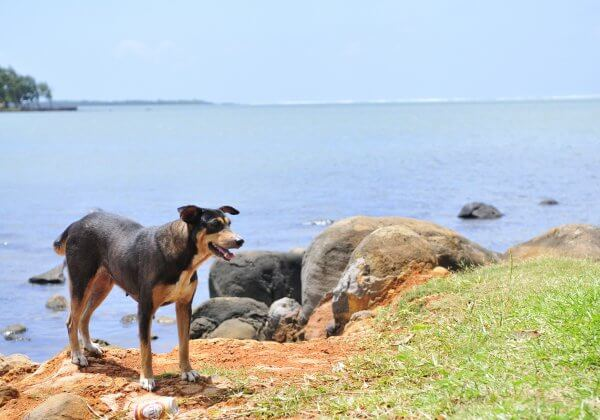 WATCH: Dogs on 'Paradise Island' Cruelly Killed. Take Action Now!