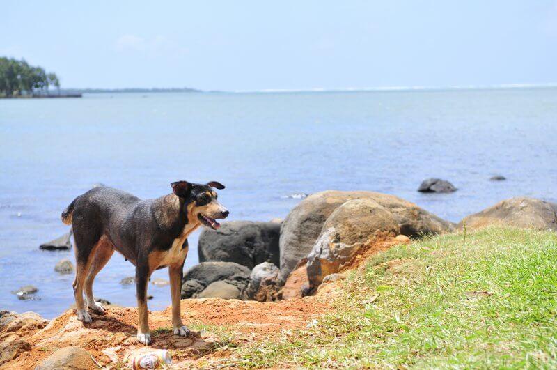 dogs-killed-in-mauritius-peta
