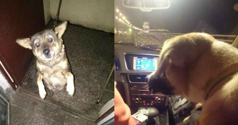 peta-asia-dog-rescue