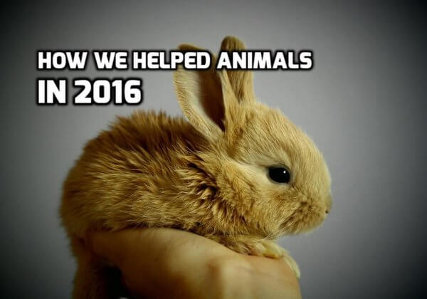 What We Achieved for Animals in 2016