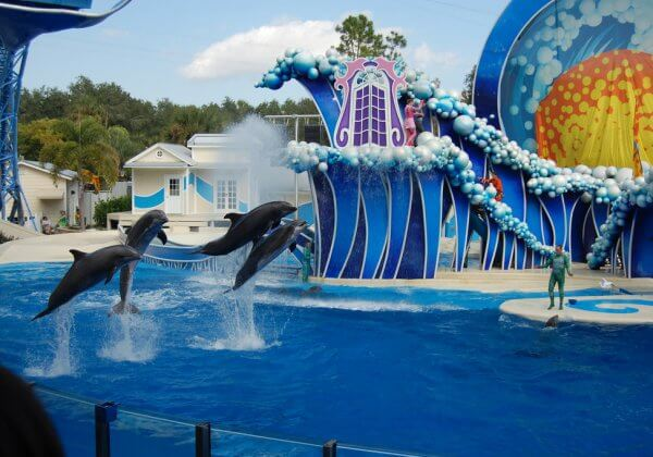 Urge Officials to Keep Animals Out of SeaWorld Abu Dhabi!