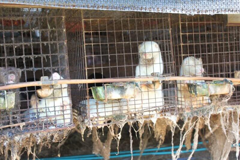 Mink fur farm in Japan closed down