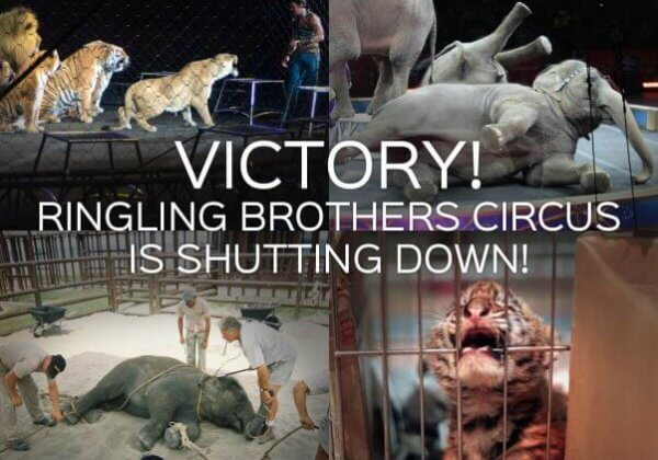 Goodbye Forever! Ringling Bros. Circus is Shutting Down