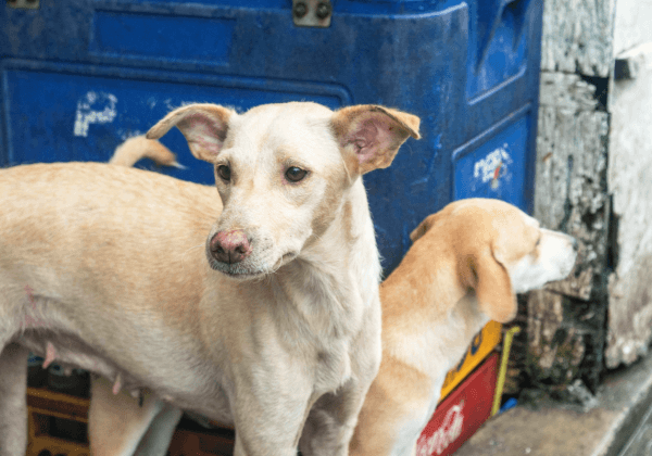 Help PETA Save Cats and Dogs in the Philippines