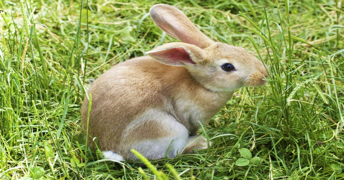 China Embraces Learning How to Use Non-Animal Cosmetics Tests