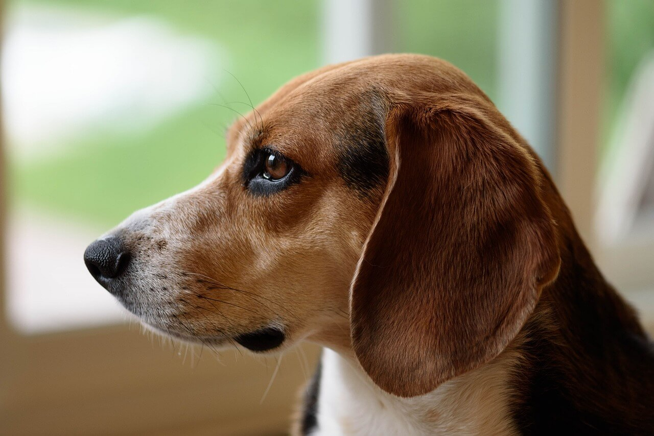 New Report Recommends Ending Routine Poisoning Test on Dogs in Japan