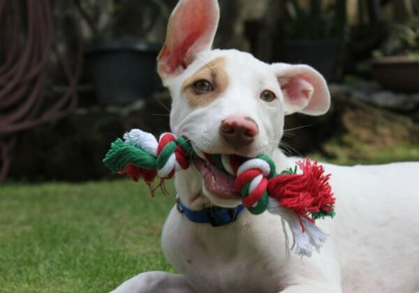 This Video Will Melt Your Heart: Christmas the Puppy's First Holiday