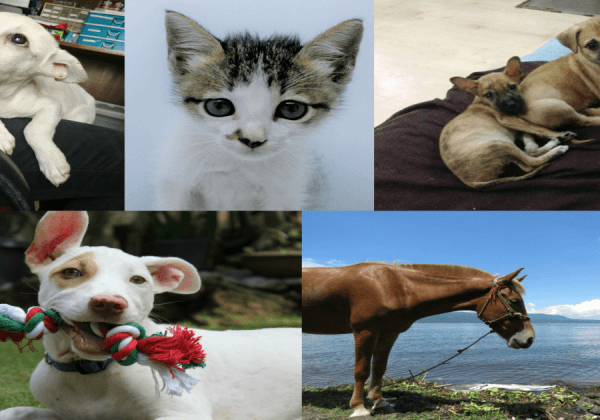 Meet Some of the Animals PETA Helped in 2017