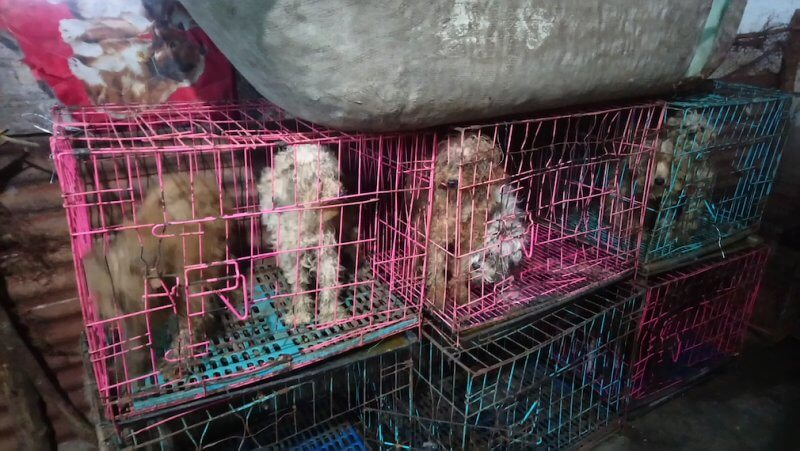 Dogs Confined to Filthy Cages in Chinese Puppy Mills
