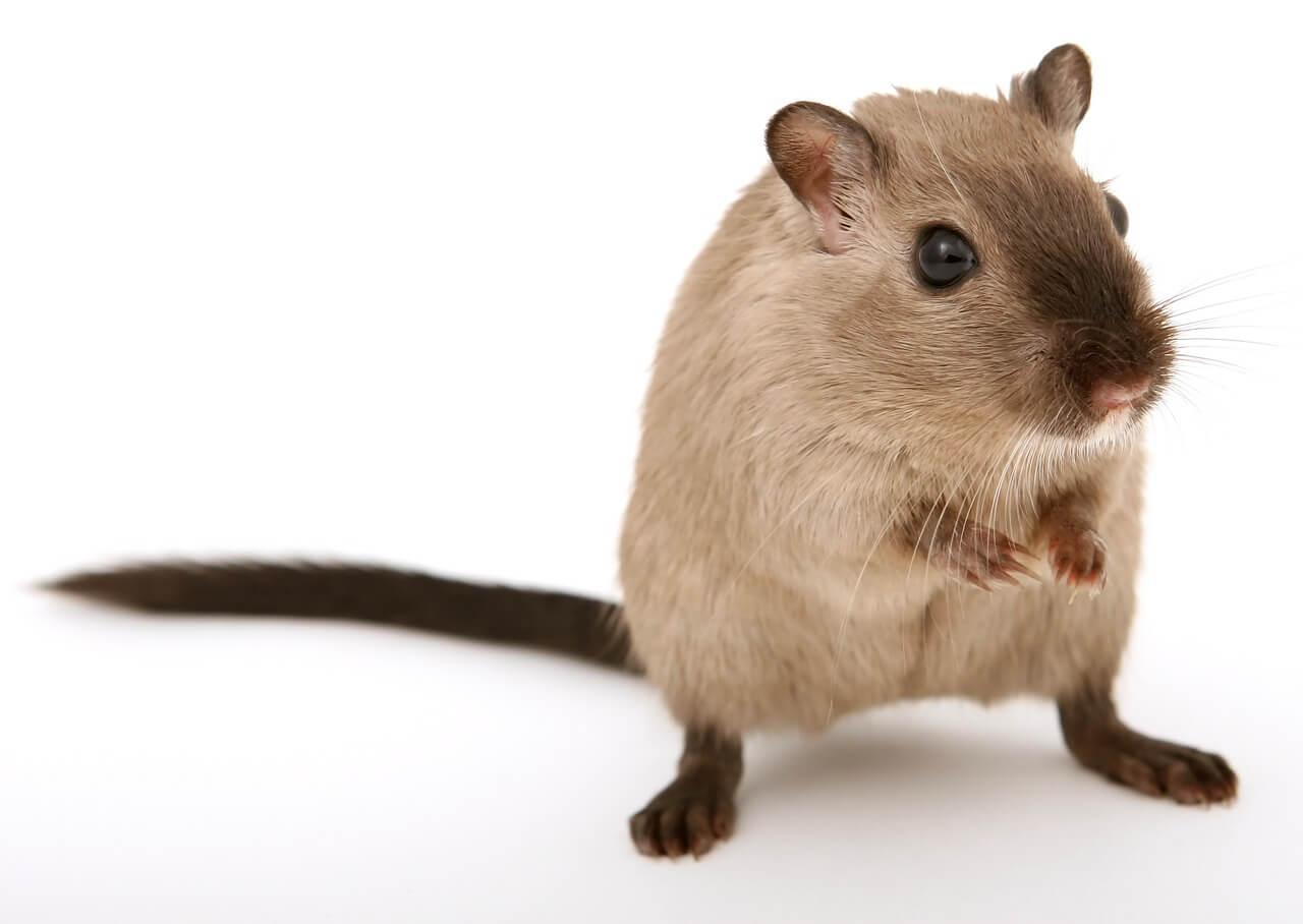Victory! Yakult Honsha Ends Animal Experiments After PETA U.S. Appeal