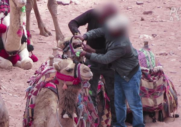 New Video Reveals Animals Are Still Beaten at Petra