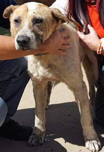 Reward for Information About Person Who Tied Dog to Train Tracks in South Africa