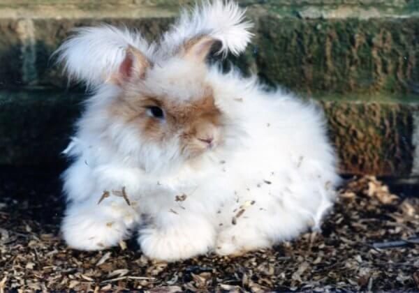 PETA Has Decimated the Angora Industry. Now Let's Win Against Mohair