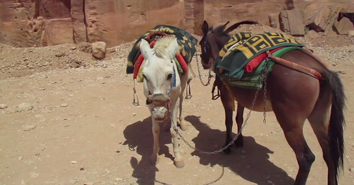 PETA's Work to Improve Animal Welfare in the Middle East