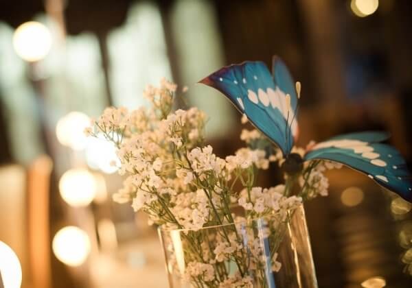 Butterfly Releases at Weddings and Other Events Are Bad for Animals