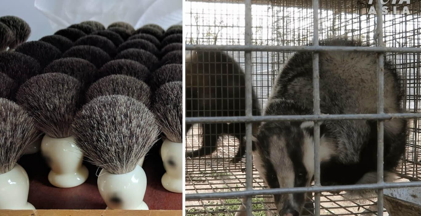 Victory! Companies Ban Badger-Hair Brushes After Shocking PETA Investigation