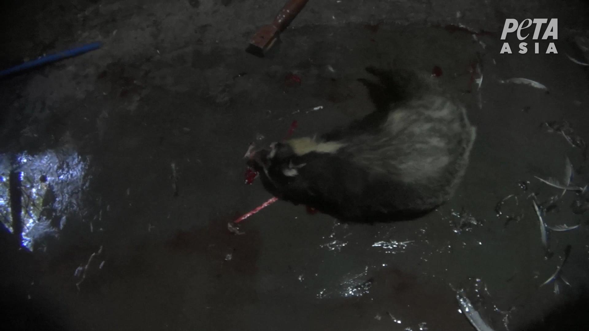 Badger bashed 2