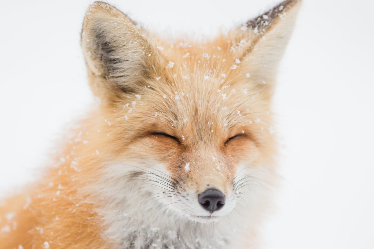 Another Fashion Victory! Chanel Bans Fur and Exotic Skins