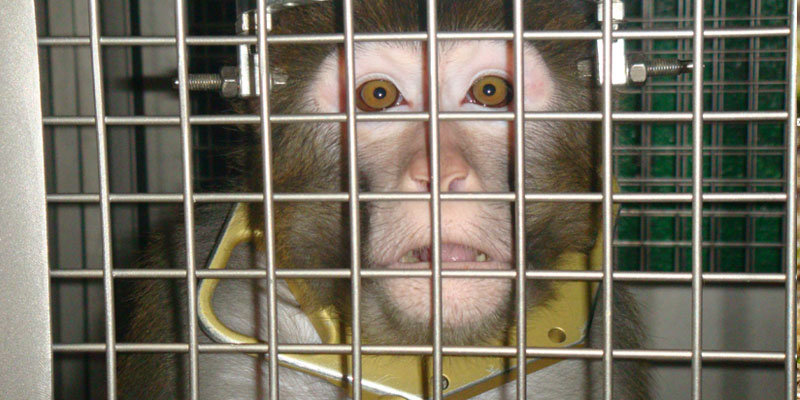 People for the Ethical Treatment of Animals | Animal Rights in Asia