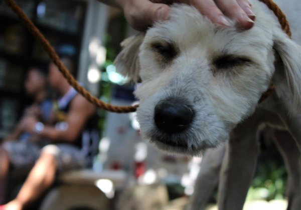 PETA Rushes to Help Animals Affected by Disastrous Fire in the Philippines
