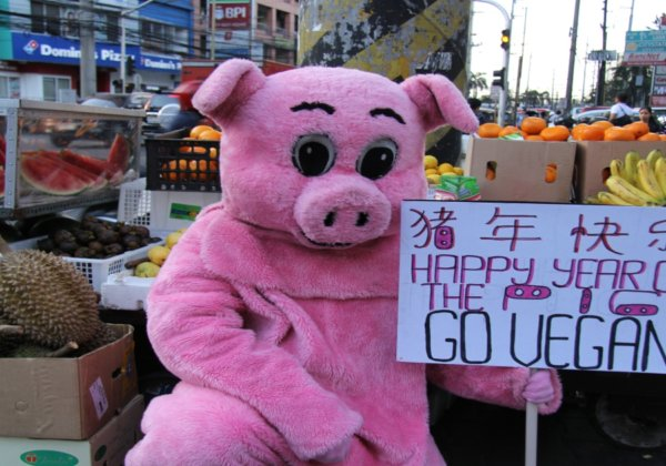 Video: This 'Pig' Is Celebrating Chinese New Year by Asking People to Go Vegan