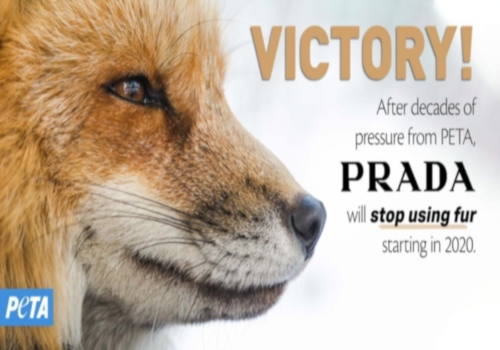 Victory! Prada Is Going #FurFree