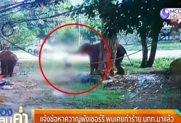 Man Killed While Trying to Feed Elephant at a Thai Tourist Trap