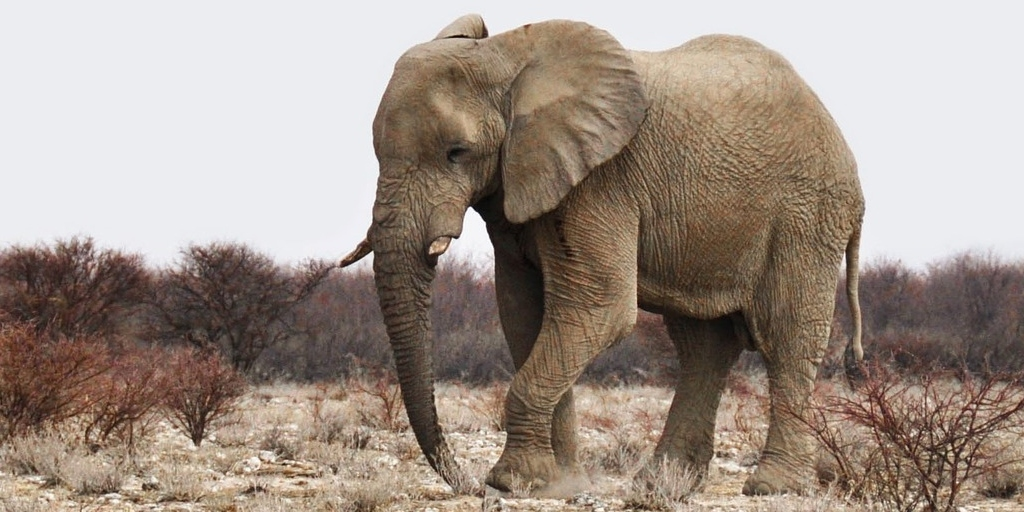 Arrests Made After Elephant Is Shot 70 Times and Mutilated by Hunters