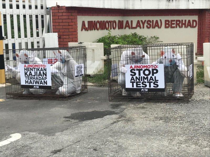 Photos: PETA 'Rat' Hits Ajinomoto's Offices in Malaysia to