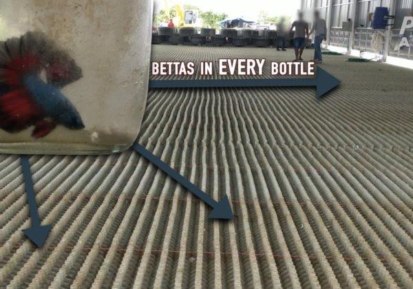 PETA Investigation Reveals Horrors in the Global Betta Fish Trade