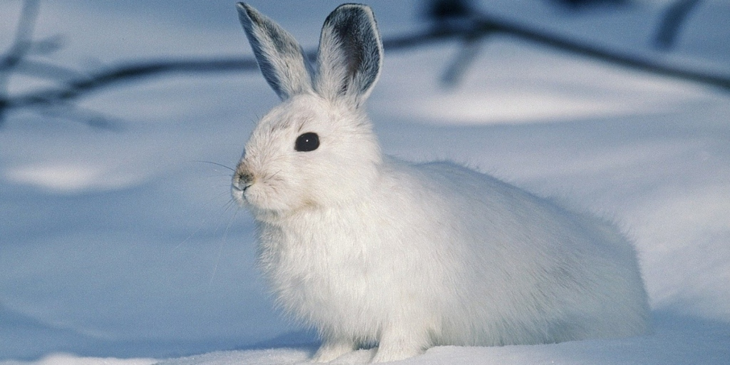 Progress! Avon Products, Inc., Takes Steps Toward Becoming Cruelty-Free