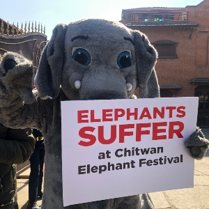 PHOTOS: 'Elephant' and Other Activists Protest Abuse at Nepal's Chitwan Elephant Festival