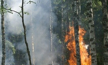 The Link Between Wildfires and Slaughterhouses: Climate Change