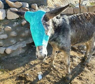 PETA's Treating Petra's Working Animals