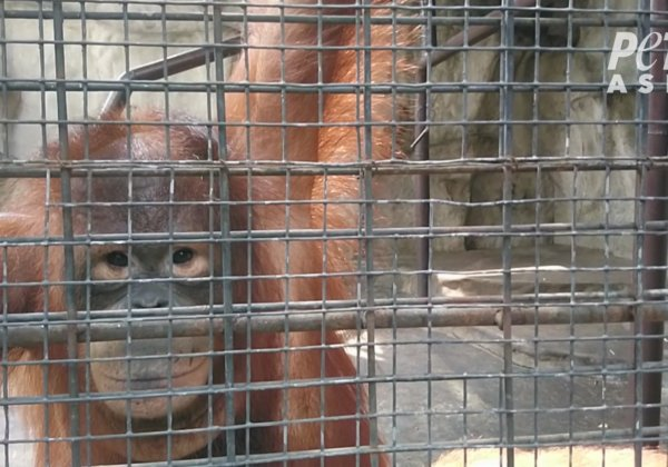Animals Are Suffering at Pata Zoo | Take Action Now!