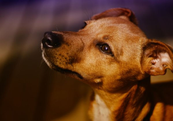 Can Cats and Dogs Carry Coronavirus?